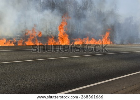 Forest fire and empty road closed, outdoor shot, concept of natural disaster or war