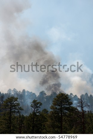 forest fire and smoke