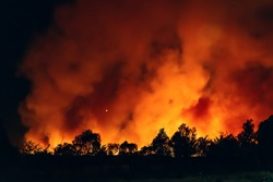 Forest fire at night, wildfire after dry summer season, burning nature in Russia, Voronezh Region