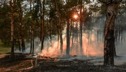 Forest fire. Burned trees after wildfire, pollution and a lot of smoke