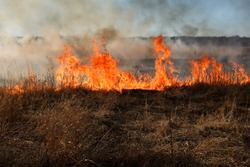 Forest fire, burning grass and small trees. fire burns grass and branches