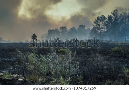 Forest fire, burning peat #1074817259