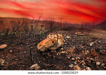 Forest fire consequences in Carmel mountains against bloody sunset.Israel