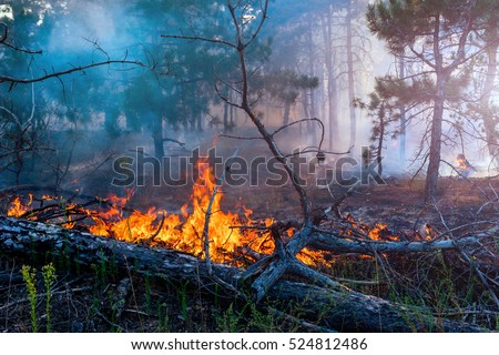 Forest fire. fallen tree is burned to the ground a lot of smoke when vildfire stock photo