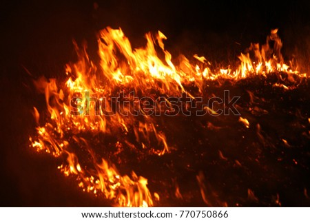 Forest fire. fallen tree is burnt on ground lot of smoke when vildfire. fire destroys everything Leaving only scorched tree and ashe. Forest burning is natural disaster. visualization of forest fires #770750866