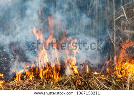 Forest fire fire wildfire