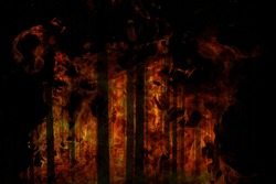 forest fire, global warming, forest fire, environmental protection, forest is on fire