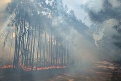 Forest fire on Moçambique breach, Florianópolis.