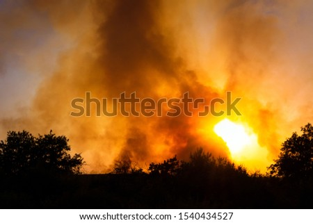 Forest fire, several hectares of pine trees burned during the dry season. burning field burning village #1540434527
