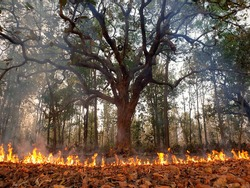 Forest Fire Tree On Fire