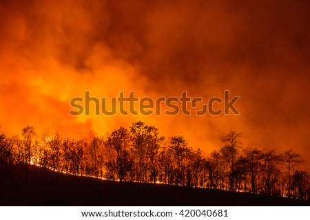 Forest Fire, Wildfire burning tree in red and orange color at night.