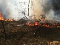 Forest firepower destroying