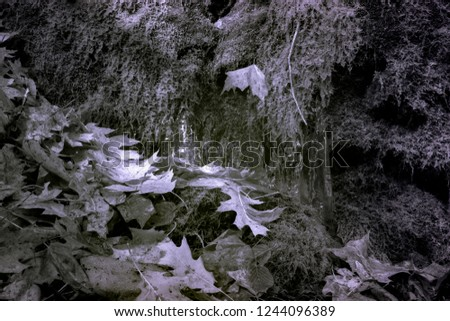 Forest Floor Late Autumn, Early Winter, Black And White Infrared Photography