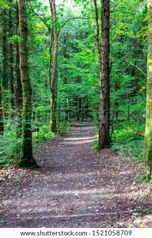 Forest footpath in the  Bellek Woods, Ireland. Stok fotoğraf ©