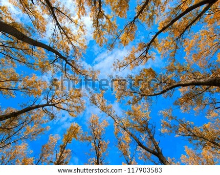 Forest / Forest low angle shot / Tall trees / Trees / Autumn