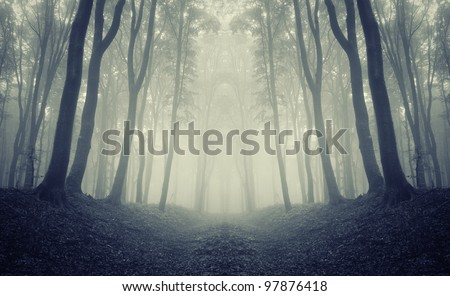 forest frame with symmetrical trees