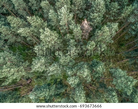 forest from above  aerial view...