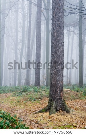 Forest full of trees covered by a fog in late autumn