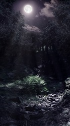 Forest glade and a brook lightened by the moon