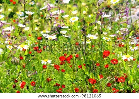 Forest glade bright with blooming spring plants