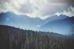 Forest. Green mountain forest landscape. Misty mountain forest. Fantastic forest landscape. Mountain forest in clouds landscape. Foggy forest. Mountain forest landscape. Dark forest in haze landscape.