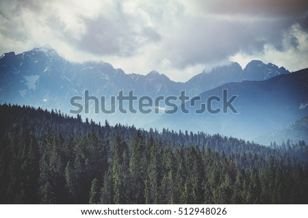 Shutterstock Forest. Green mountain forest landscape. Misty mountain forest. Fantastic forest landscape. Mountain forest in clouds landscape. Foggy forest. Mountain forest landscape. Dark forest in haze landscape.