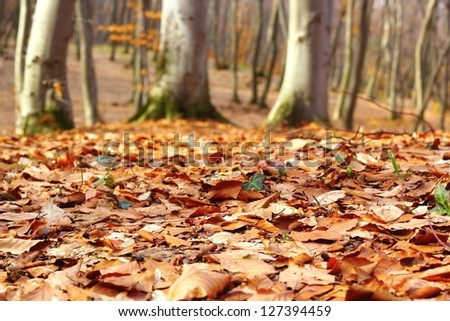 forest ground in late autumn with faded leaves