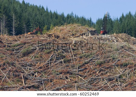 Forest harvesting and clearcutting operation.