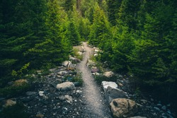 Forest hiking trail.