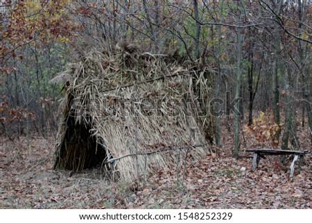 forest hovel trees glade nature #1548252329