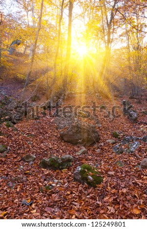 forest in a rays of sun - stock photo