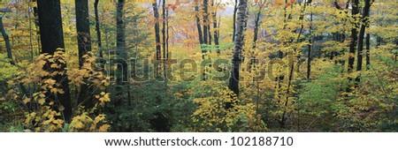 Forest in autumn, Massachusetts