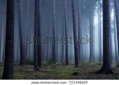 Forest in autumn morning mist