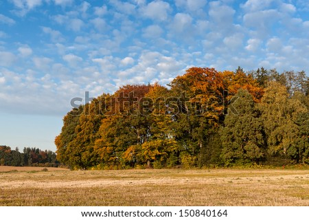 Forest in beautiful autumn/fall colors against a blue sky with white clouds.