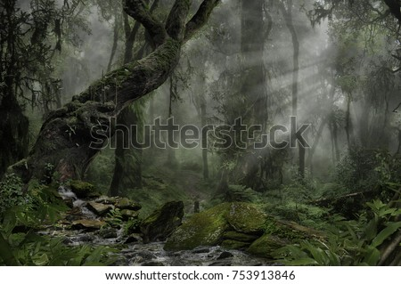 Stock Photo Forest in darkness