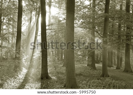 Forest in early morning.