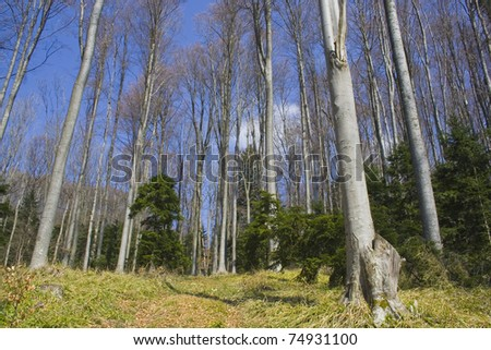forest in early spring. Picture taken in April. - Shutterstock ID 74931100