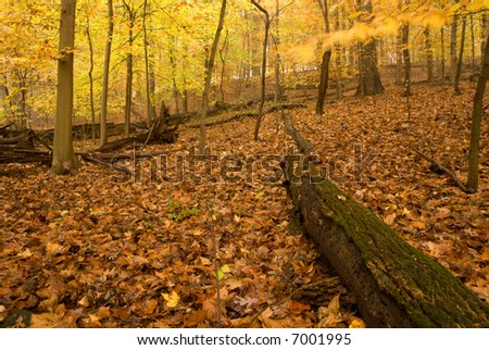 Forest in Fall.