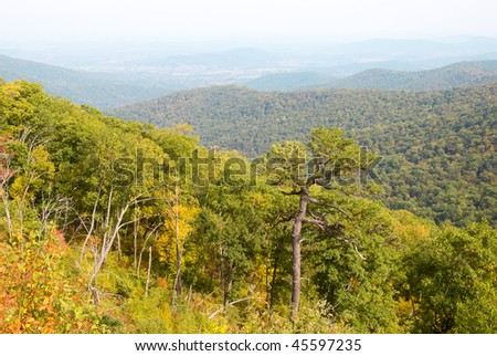 forest in fall color