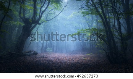 Forest in fog. Fall woods. Enchanted autumn forest in fog in the morning. Old Tree. Landscape with trees, colorful green and red foliage and blue fog. Nature background. Dark foggy forest #492637270