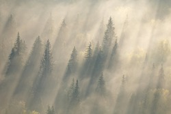 forest in fog, russian nature, forest mist