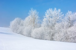 forest in hoarfrost on snow covered hill. sunny morning landscape. misty weather with blue sky. winter fairy tale. beautiful nature scenery of white season in carpathian mountains