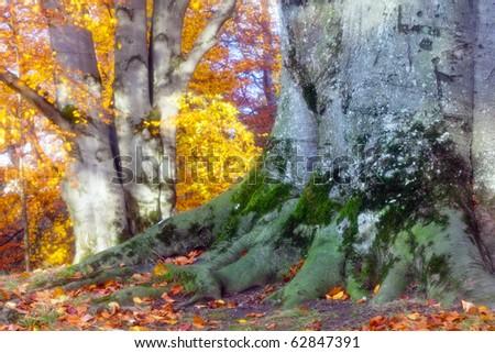 Forest in Innsbruck, Austria