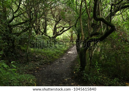 Forest in Killarney #1045615840