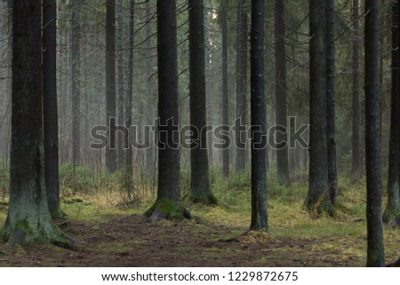 Forest in late autumn