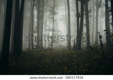 forest in mist #380157856