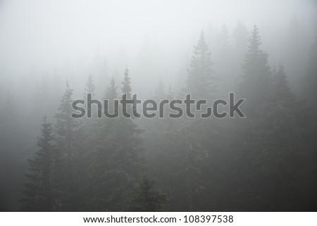 Forest in mystery fog, Czech Republic