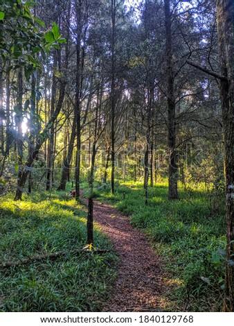forest in Santa Elena Medellín Colombia Stok fotoğraf ©