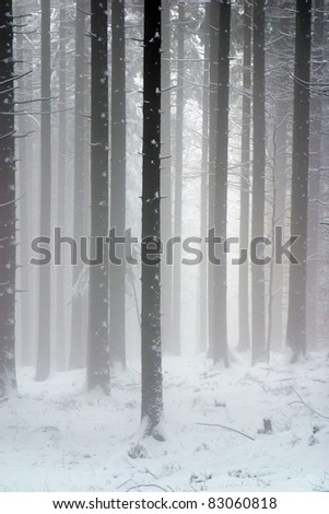 Forest in snow