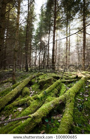 Forest in south Germany in spring time